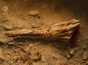 andean-noble-preserved-bone-615